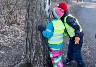 Two boys are studying the pattern of the bark.